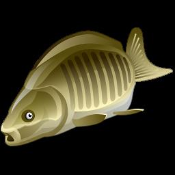 Покупка товаров для рыбалки